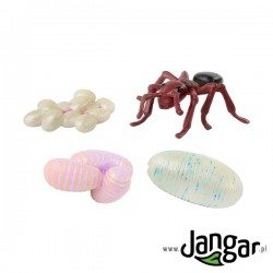 Zestaw modeli: Cykl życiowy mrówki