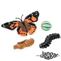 Zestaw modeli: Cykl życiowy motyla