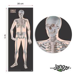 Mata - Szkielet człowieka – przód, 100 x 38 cm