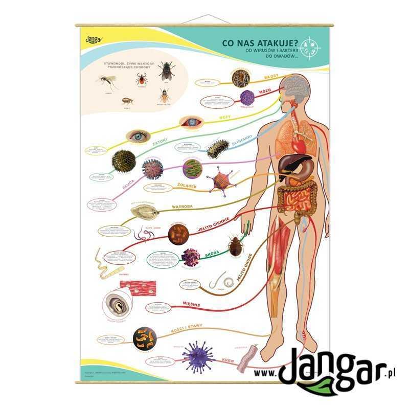 Plansza ścienna: CO NAS ATAKUJE? Od wirusów i bakterii do owadów 90x130 cm