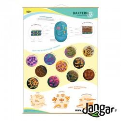 Plansza ścienna: Bakterie chorobotwórcze 90x130 cm