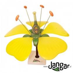 Model kwiatu z zalążnią i zalążkiem