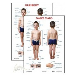 Plansza ścienna: Nasze ciało / Our body, 2-stronna