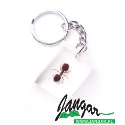 Okaz zatopiony w tworzywie – Mrówka, brelok