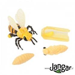Zestaw modeli: Cykl życiowy pszczoły