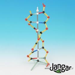 Model DNA – uczniowski, do montażu
