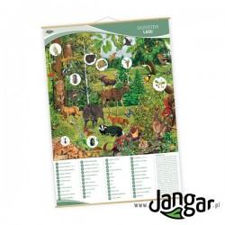 Plansza ścienna: Ekosystem lasu, 91 x 130 cm