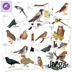 Gra Memory-54: Ptaki Polski – 54 elementy w pudełku
