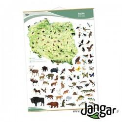 Plansza ścienna: Fauna Polski, 90 x 130 cm