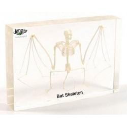 Szkielet naturalny w tworzywie: Nietoperz