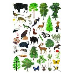 Naklejki leśno-przyrodnicze, 137 organizmów