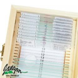 Histologia (człowiek) – zestaw 25 preparatów mikroskopowych