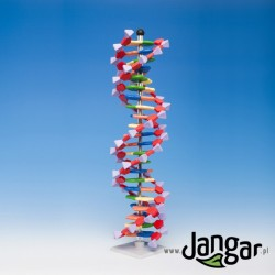 Model DNA – duży  (2 skręty helisy, 45 cm)