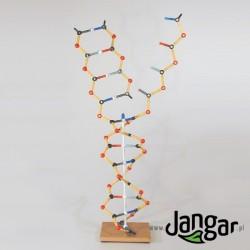 Model DNA ekonomiczny