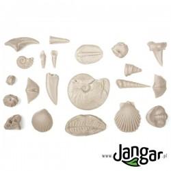 Zestaw do nauki o skamieniałościach